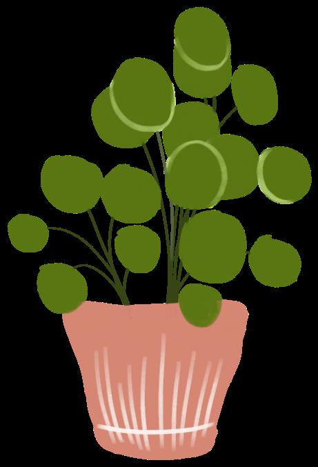 Pannenkoek